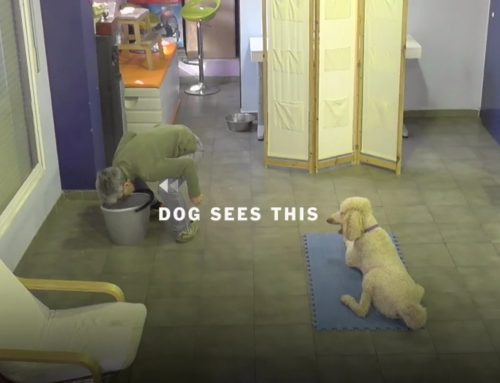 【研究】犬は僕達が思っている以上に高度に記憶できるのかもしれない