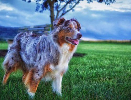 【雑学】かまってちゃんの犬 7犬種