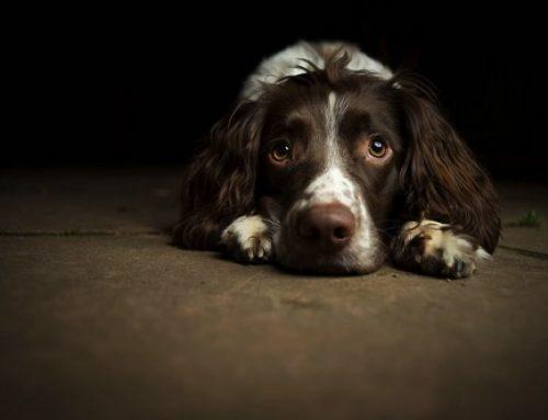 【コラム】犬は反省などしない