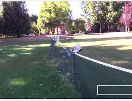 【動画】前宙返りを見事に決める犬
