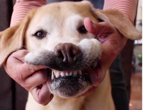 【健康】ホームメイド 犬用歯磨き粉