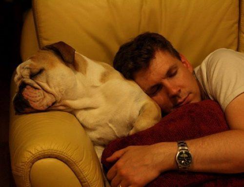 【雑学】犬のいびきで人はよく寝れる