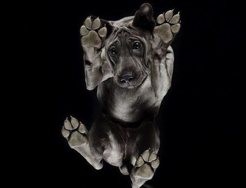 【写真】犬をしたから見たらどう見える?