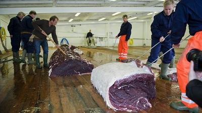 789488 fin whale hvalur hvalfjsrour