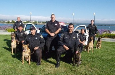 Copy of K9 Team