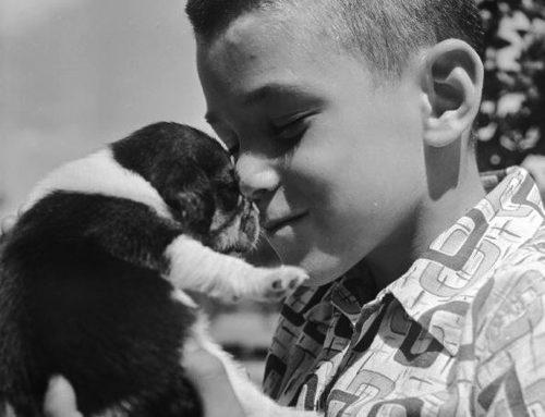 【日々】犬に顔を舐めさせるのは危険の可能性も