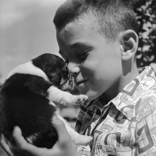A boy gives love to a pet beagle puppy