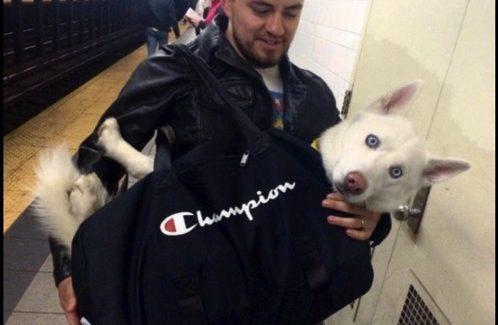 【ニュース】ニューヨーク カバンに入っている犬が続出! シュールな光景が広がる