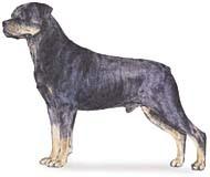 アメリカ 人気犬種ランキング 2011