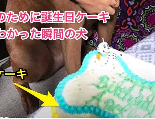 【写真】誕生日が待ち遠しい犬