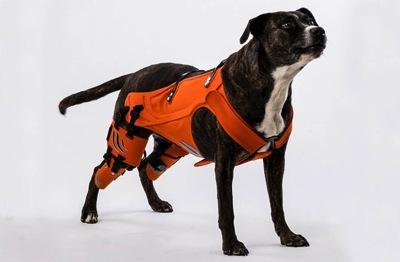 Dnews files 2014 09 hip harness helps dogs 670 jpg