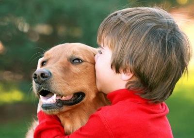 Dog autism