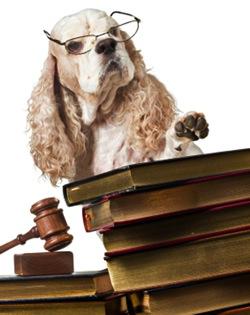 Dog judge books gavel law 450