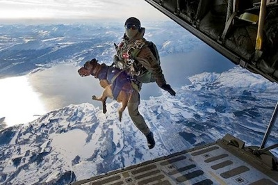 Dog military dog jumping from plane military dot com
