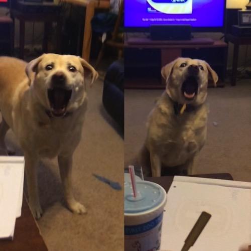 Funny dog 10