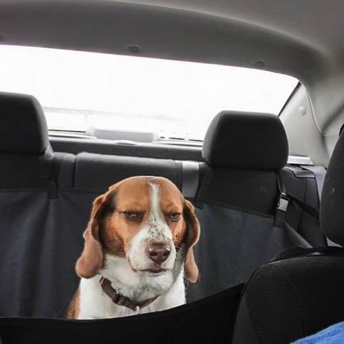 Funny dog 12