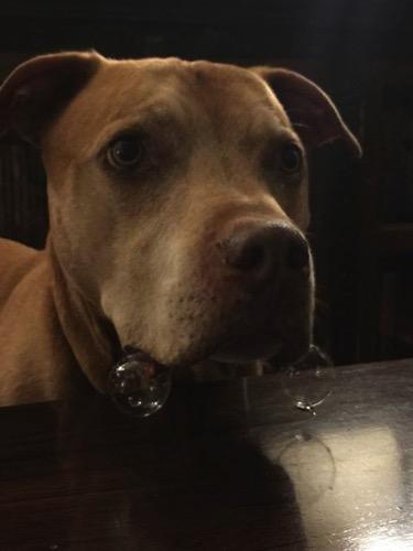 Funny dog 14