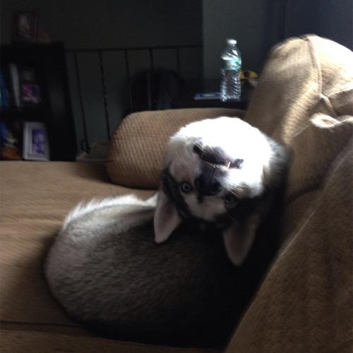 Funny dog 8