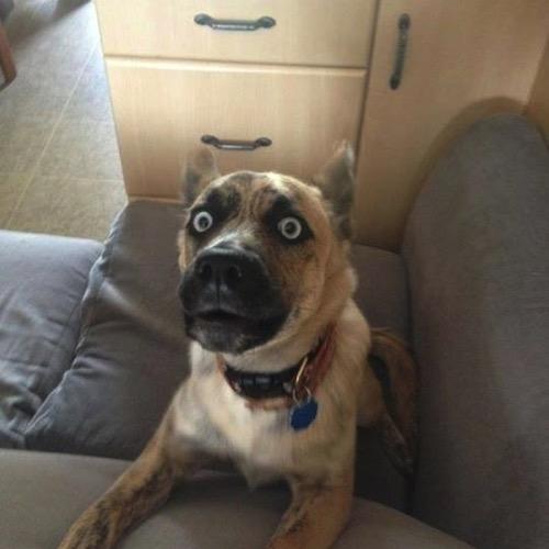 Funny dog 9