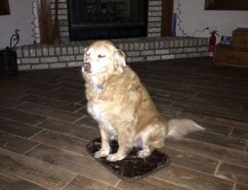 【犬ニュース】飼い主に疑いを持たない犬