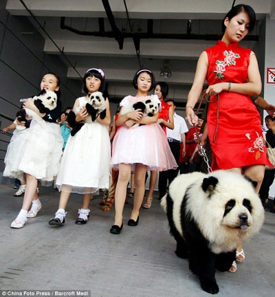 Pandadog leash 530