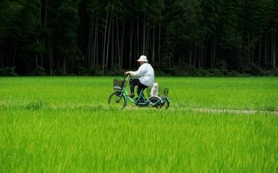 Rice bicycle 2407633k