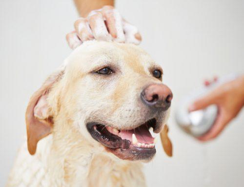 【健康】犬ってどれくらいの頻度で洗えばいいの?