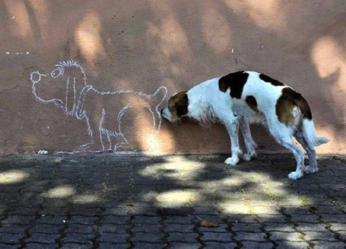 Timed dogs 13