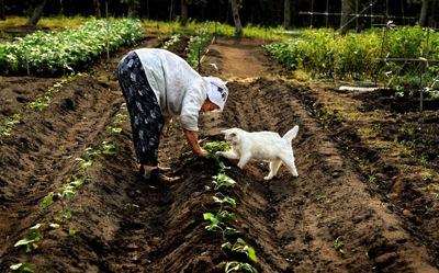 Vegetable garden 2407640k
