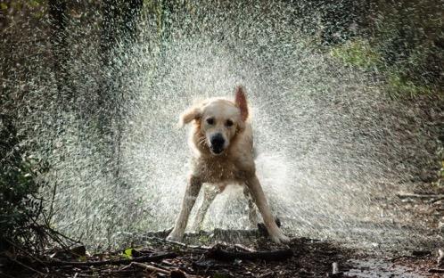 Water dog 1 590x369