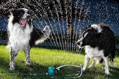 Water dog 10