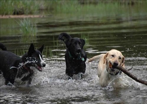 Water dogs 7 590x417