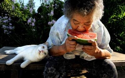 Watermelon 2407641k