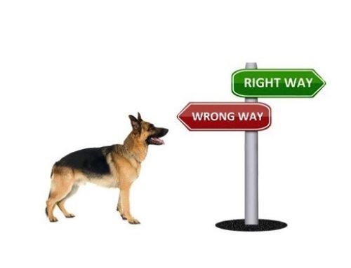 【実験】犬の間違いは指摘してはならぬ