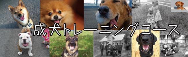 成犬用トレーニングコース